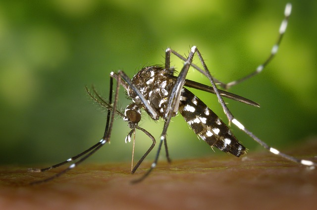 tiger mosquito 49141 640